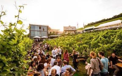 Wein am Stein Weinfest